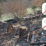 Waldbrandgefahr - kein offenes Feuer auf Grün- und Waldflächen entzünden