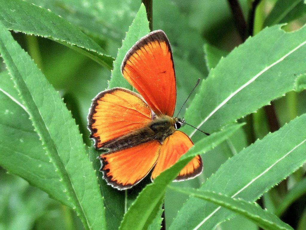 Unterstützung für das Volksbegehren zur Artenrettung