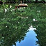 Schlewecker Dorfteich - Junge Forellen schwimmen unter der Holzskulptur