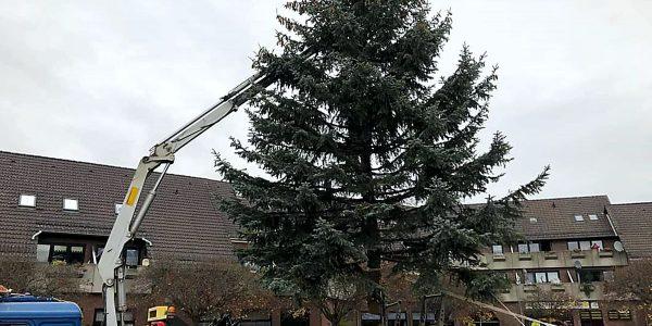 Der Weihnachtsbaum wurde auf dem Marktplatz in Vienenburg aufgestellt
