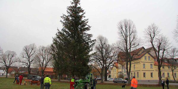 Firma Friehe stellt den Weihnachtsbaum auf dem Marktplatz auf