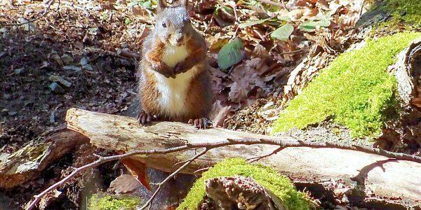 Kleine Helfer im Wald