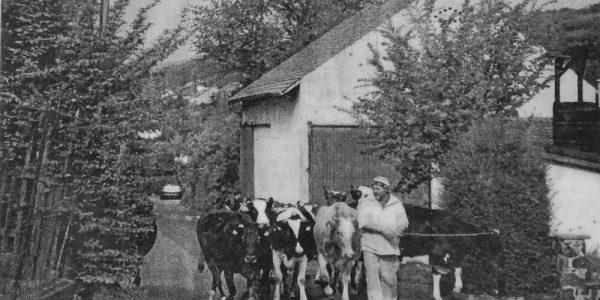 Keine Milchkühe mehr im Stadtgebiet von Goslar